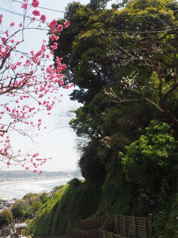鎌倉 成就院の坂から見える海