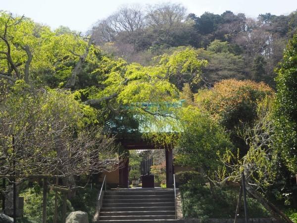 光則寺 鎌倉花の寺
